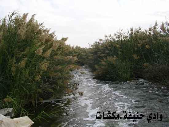وادي حنيفة في الرياض تحول إلى منتزه رااااااااااائع mk7125_c.jpg