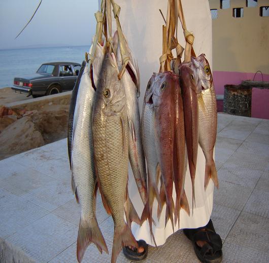 الأسماك والمحار والقيمة الغذائية لهما