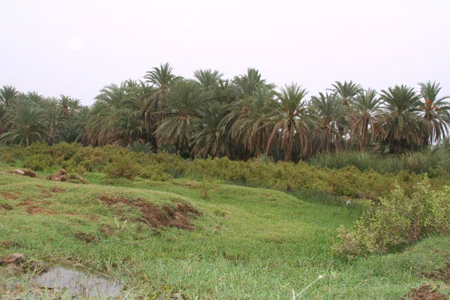 وادي قنونا الجارة mk22330_img3.jpg