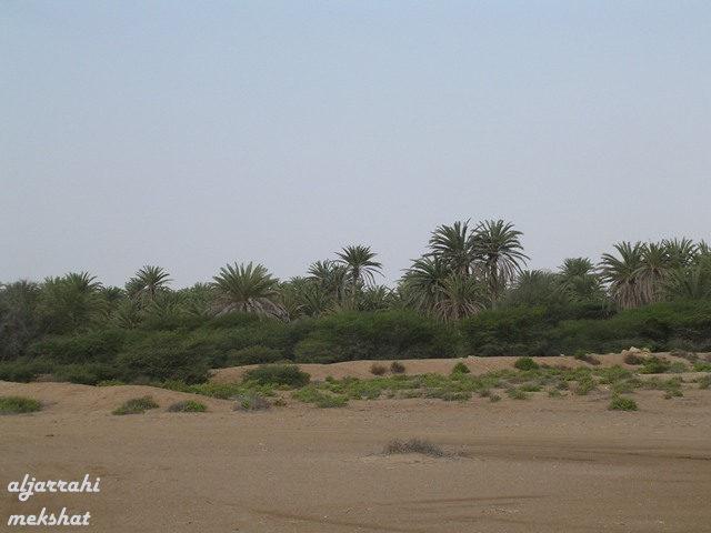 جزيرة فرسان السعودية