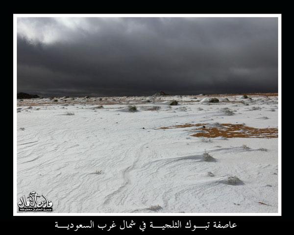 سحر وجمآل تبوك الورد ~ بلاد العرب اوطاني mk9543_o16.jpg