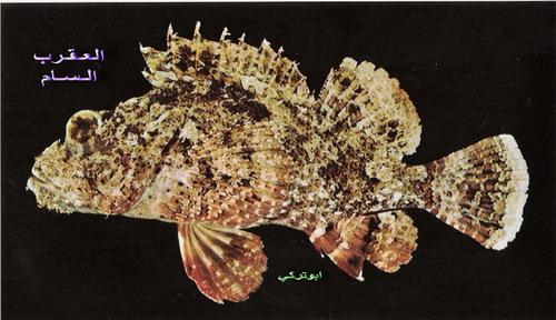 انواع السمك البحر الاحمر mk16363_1332.jpg