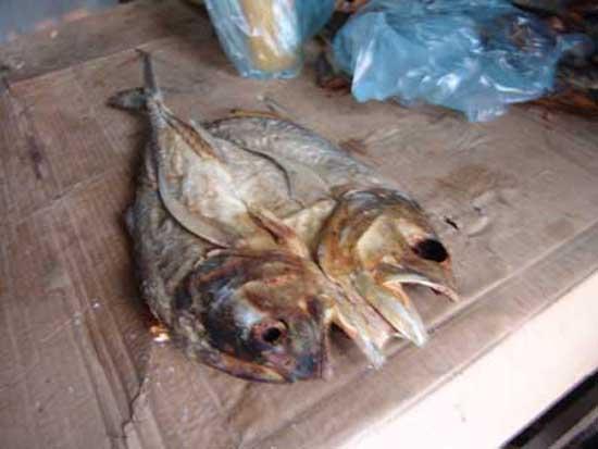 هاذا نوع منالسمك يقصونه نصين ويملحونه