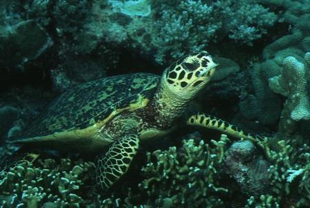 اجمل الحيوانات البحرية ، صور حيوانات بحرية 2014 mk42658_1.jpg