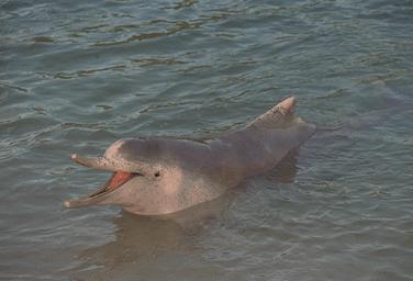 معلومات عن بعض انواع الدلافين Mk42658_113