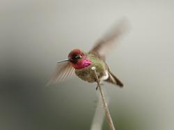 معلومات عن الطيور mk42658_12.jpg