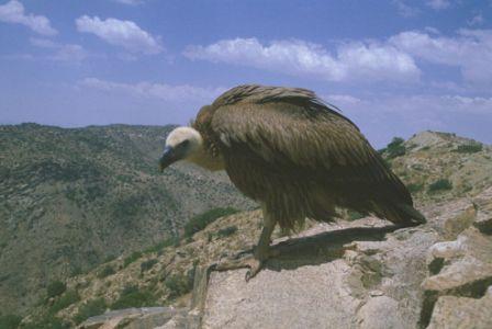 معلومات عن الطيور mk42658_13.jpg