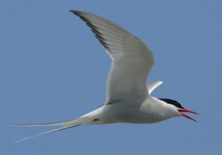 معلومات الطيور