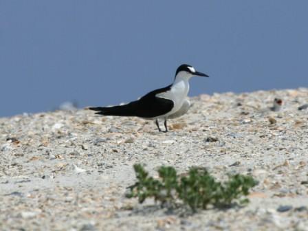 معلومات عن الطيور mk42658_16.jpg