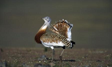 معلومات عن الطيور mk42658_2.jpg