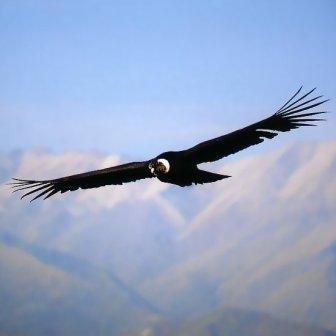 معلومات عن الطيور mk42658_3.jpg