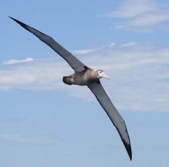 معلومات عن الطيور mk42658_5.jpg