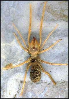 عالم الحشرات - العناكب