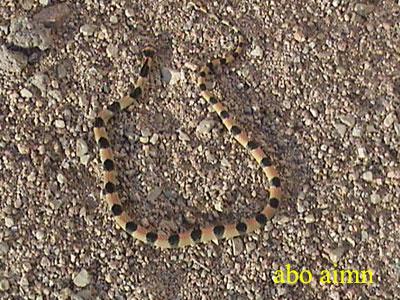 أجمل أنواع الثعابين - أجمل ثعبان بالصور