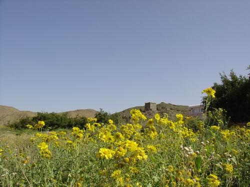 سياحة الطائف 2011 ،صور روعة