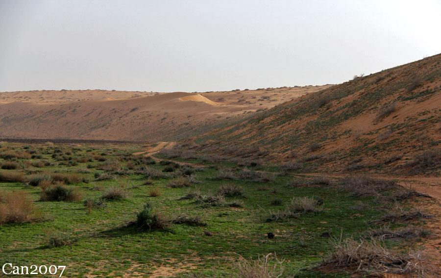 ربيع منطقة العليم شمال حايل