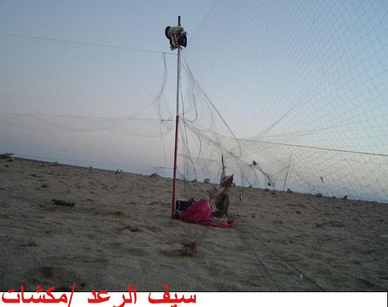 مغناطيس المخاطر تربيتة شبكة صيد العصافير Zetaphi Org