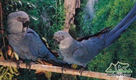 الطيور... mk42658_204.jpg