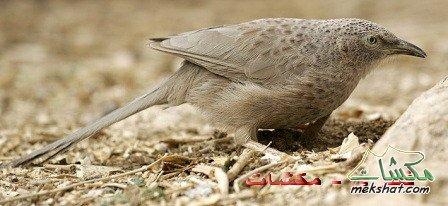 الطيور... mk42658_44.jpg