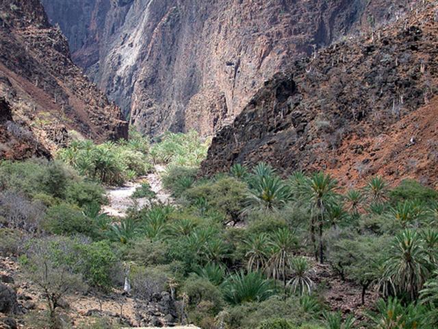 جزيره سقطرى اليمنية تطرح «لغزاً جديداً في تاريخ الحضارات»؟؟..؟؟  Mk78566_345384077_00bae660ce%20(small)