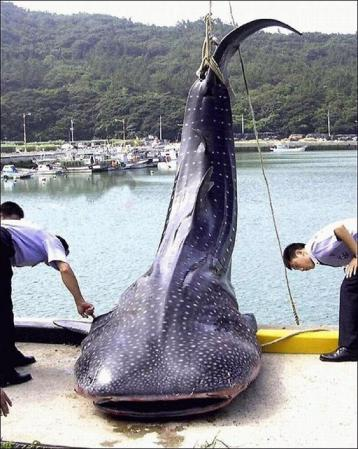 غريبة وطريفة للأسماك ..... mk31044_1.jpg