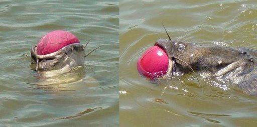 غريبة وطريفة للأسماك ..... mk31044_16.jpg
