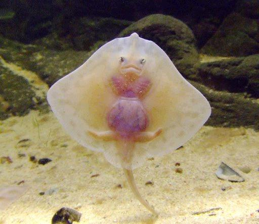غريبة وطريفة للأسماك ..... mk31044_21.jpg