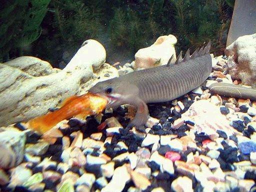 غريبة وطريفة للأسماك ..... mk31044_28.jpg