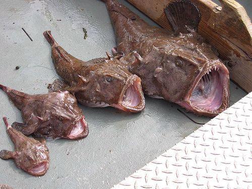 غريبة وطريفة للأسماك ..... mk31044_36.jpg