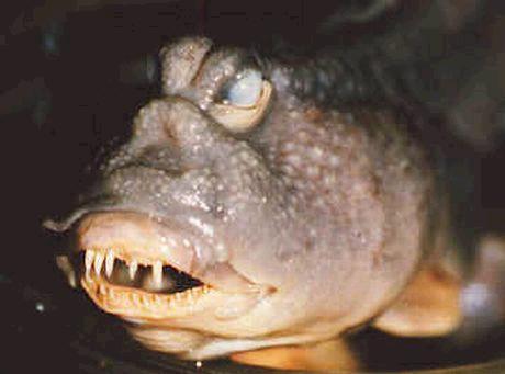 غريبة وطريفة للأسماك ..... mk31044_37.jpg