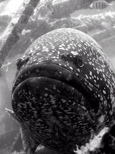 غريبة وطريفة للأسماك ..... mk31044_38.jpg