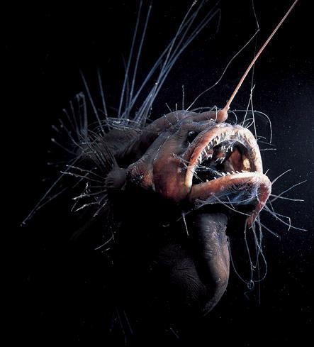 غريبة وطريفة للأسماك ..... mk31044_42.jpg