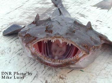 غريبة وطريفة للأسماك ..... mk31044_43.jpg