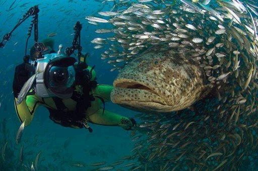 غريبة وطريفة للأسماك ..... mk31044_47.jpg