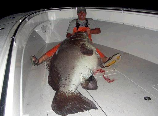 غريبة وطريفة للأسماك ..... mk31044_5.jpg