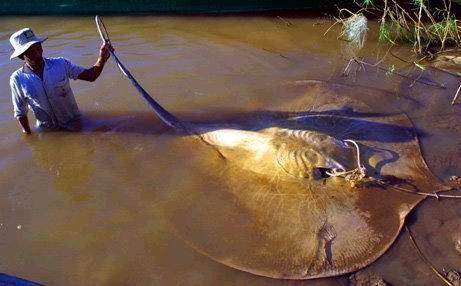 غريبة وطريفة للأسماك ..... mk31044_7.jpg