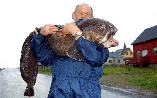 غريبة وطريفة للأسماك ..... mk31044_8.jpg