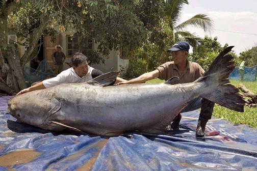 غريبة وطريفة للأسماك ..... mk31044_9.jpg