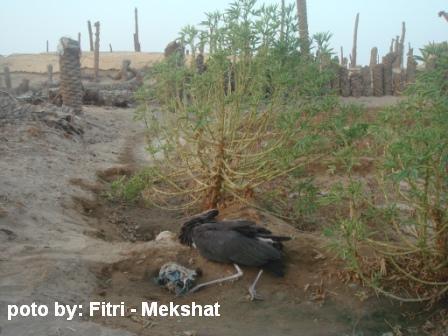 طيور اللقلق،، الطيور المائيــــــــة mk42658_priidupoeg.j