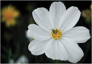 تعلم تصوير الزهور كالمحترفين