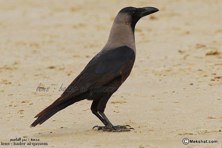 صورة طيور جزيرة تاروت