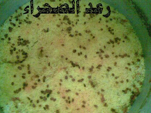 http://www.mekshat.com/pix/upload03/images121/mk72300_6.jpg