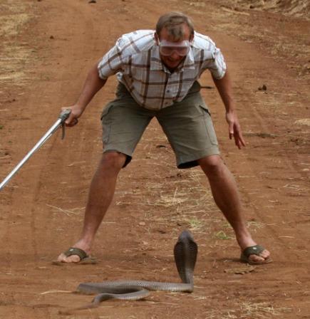 تعرف إلى ثعبان الكوبرا سريعا