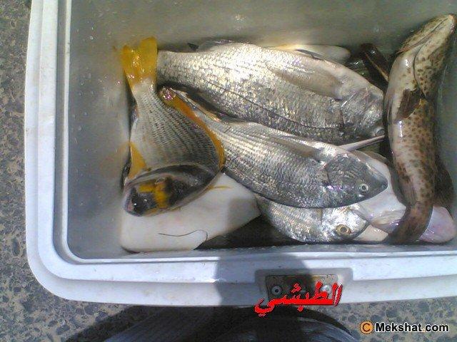 http://www.mekshat.com/pix/upload04/images168/mk54291_111%20(1).jpg