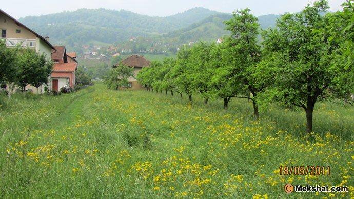البوسنة mk37815_110.jpg