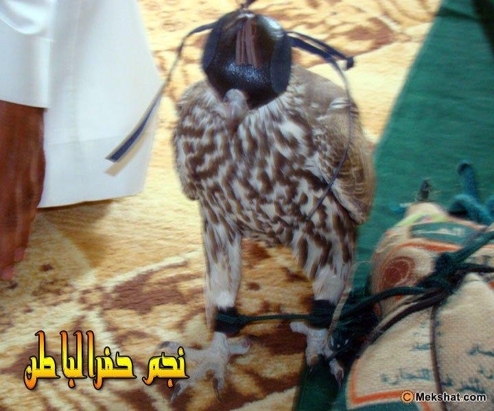 طرح طير وحش بحفرالباطن ........